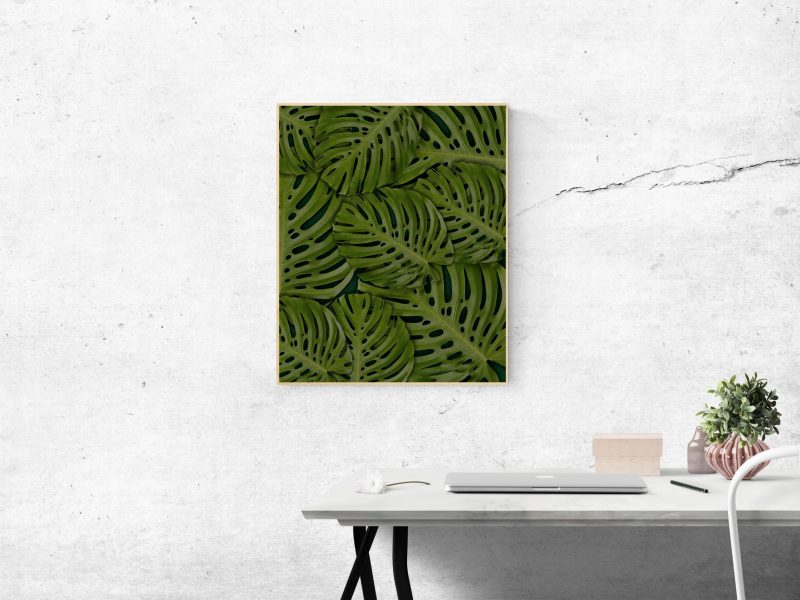 rectangular-green-swiss-cheese-leafed-plant-photo-mounted-on-1534924